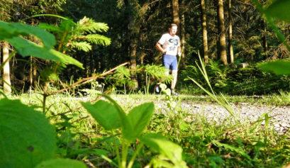 Laufen im Wald Immunsystem durch Terpene